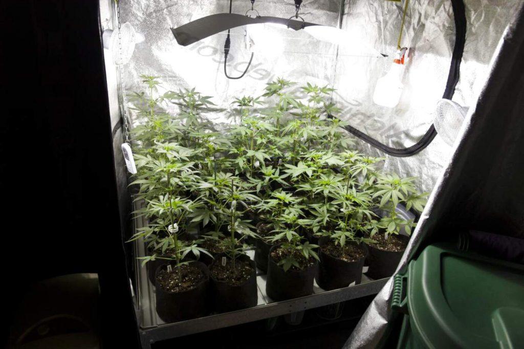 Armario de cultivo con plantas en el interior