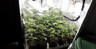 armario cultivo interior