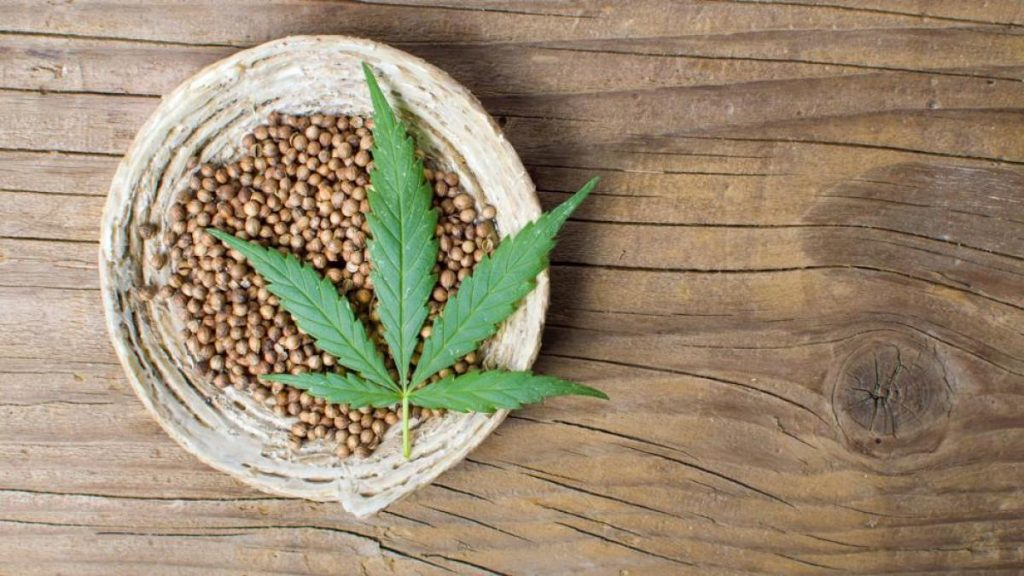 semillas de cáñamo